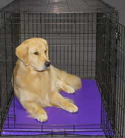 Primo pad for Dog Crate for Sale in Nashville,  TN