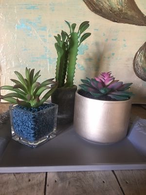 Artificial Succulents for Sale in Clarksville, TN