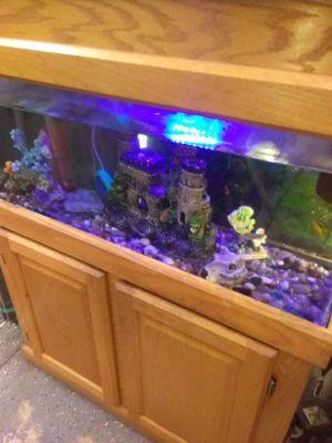 40 gallon hooded aquarium set up for Sale in Philadelphia, PA