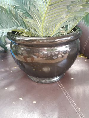 3 Plants w/pots for Sale in Hollywood, FL