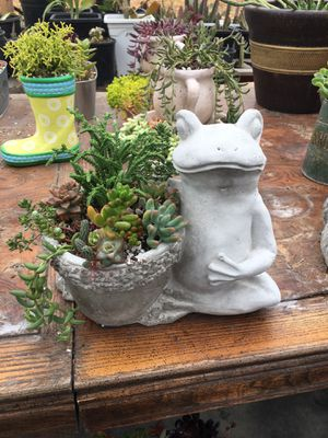 Cement frog with succulent for Sale in Cudahy, CA
