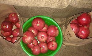 Pomegranates / Granada's for Sale in Selma, CA