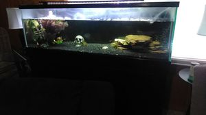100 gal Aquarium with 🐠 for Sale in Smyrna, TN