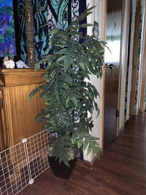 5 ft tall Artificial house plant with pot for Sale in Tarpon Springs, FL