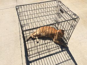 Petmate PET CRATE Cage (dog or cat kennels/cages) for Sale in Parma, OH