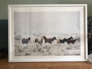 Framed photography print with wild horses for Sale in Seattle, WA
