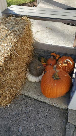 Free pumpkins and 2 bales of hay for Sale in Birmingham, MI