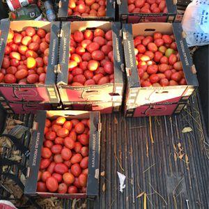Tomatoe For Sale for Sale in Riverside, CA