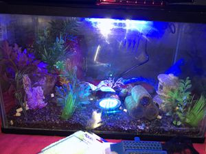 10 Gallon start up fish tank for Sale in Land O Lakes, FL