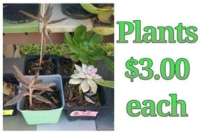 Plants $3 each for Sale in Hacienda Heights, CA
