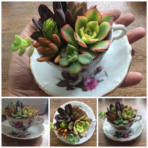 Lil cup of tea succulent arrangement for Sale in Tavares, FL