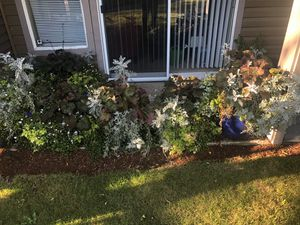 Plants/Pots for Sale in Mukilteo, WA