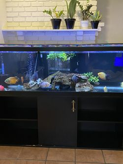 125 GALLON FISH TANK W/ STAND for Sale in Mesa,  AZ