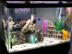 Marine fish tank, 65 gallon for Sale in Fort Lee, NJ