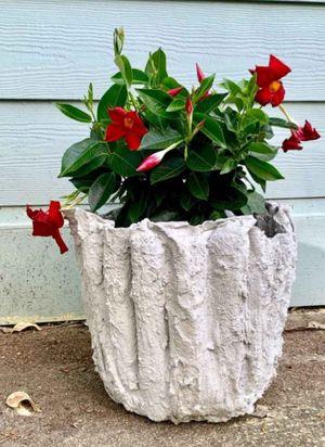 Flower pots for Sale in Orlando, FL