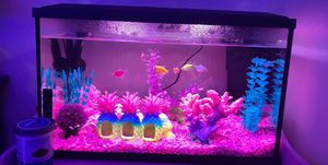 Topfin 10 gallon tank for Sale in Monroe, NC