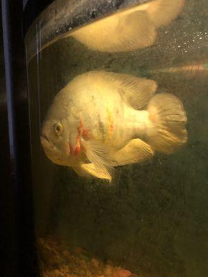 Aquarium fish for Sale in Staten Island, NY