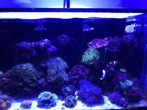 Innovative Marine 20 gallon saltwater aquarium complete setup for Sale in Miami, FL