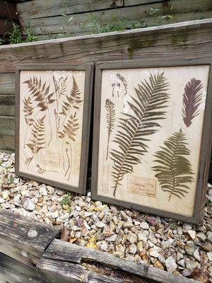 Vintage leaf prints for Sale in Fridley, MN