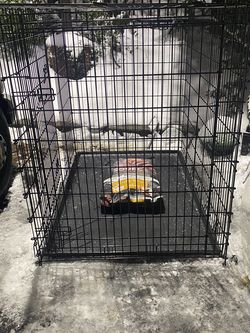 *****fg2XL Double Door Dog Crate For Dogs Over 125lbs. Comes With 24lb Bag Of High Protien Senior Dog Food for Sale in Baltimore,  MD
