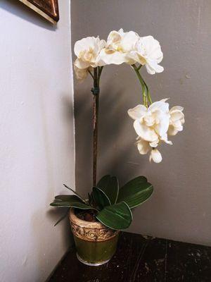 Decor Plant Artificial for Sale in Joliet, IL