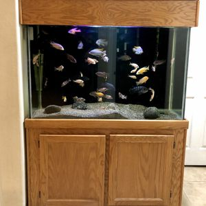 110 Tall Fish Tank for Sale in Las Vegas, NV