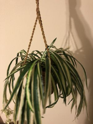 Fake hanging plastic potted plant for Sale in Atascocita, TX