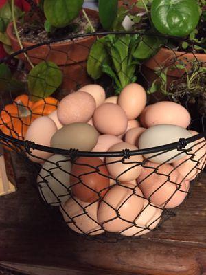 Farm Fresh Eggs for Sale in Valley Center, CA