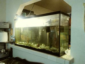60gal fish tank for Sale in Los Angeles, CA