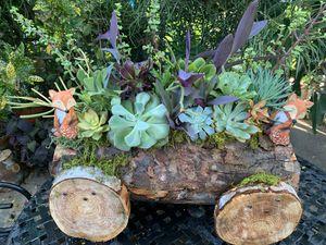 Succulent en carreta Xgrande for Sale in Bell, CA