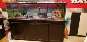 125 gallon fish tank everything pictured is included for Sale in Alsip, IL