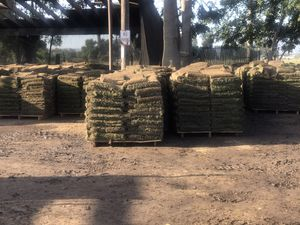 New fresh sod for Sale in Los Angeles, CA