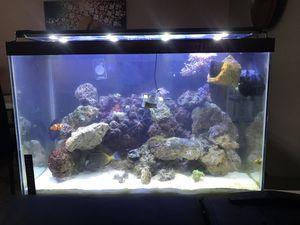 20 gallon reef saltwater aquarium setup + stand for Sale in New Castle, DE