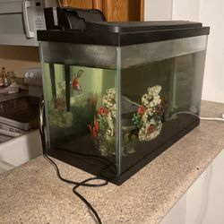 "24x12x16"" Fish Tank (20 Gallons) With Filtration for Sale in Fresno,  CA"