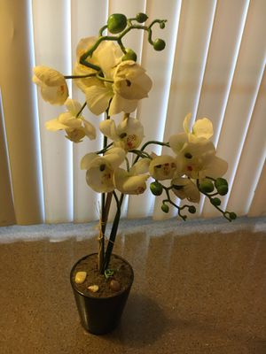 Orchid Plant for Sale in Dinuba, CA