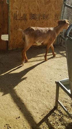 Goat Feeder for Sale in Jurupa Valley,  CA