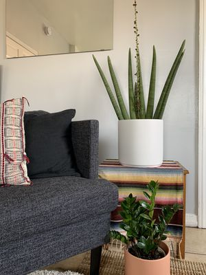 Snake plant in ceramic cylinder planter for Sale in Los Angeles, CA