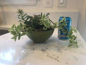 Variety succulent garden planter for Sale in Seattle, WA