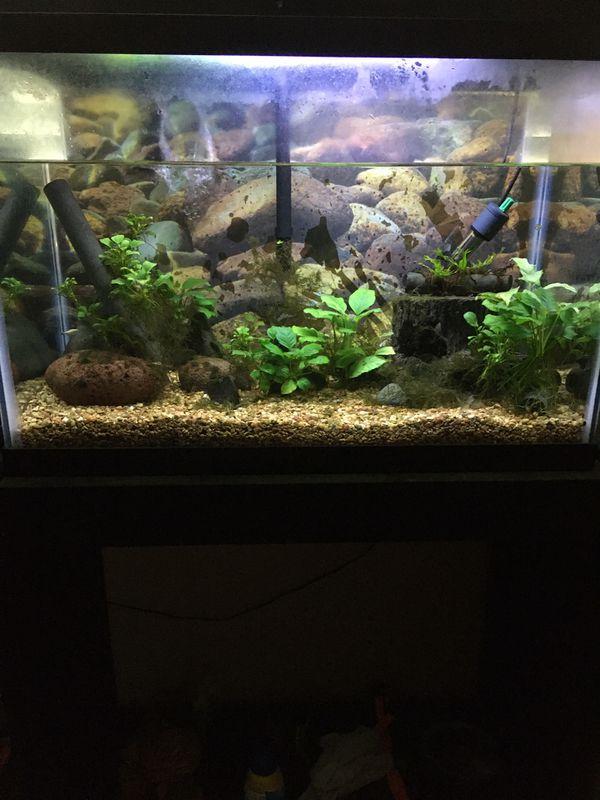 20 gallon aquarium.