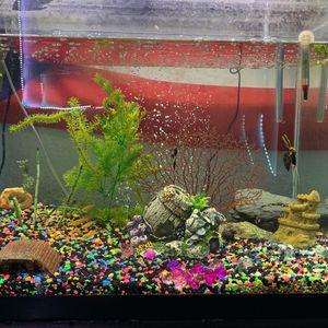 55-60 gallon fish tank for Sale in Forest Park, IL