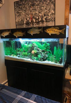 55 gallon fish tank full set up for Sale in Attleboro, MA