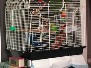 Free parakeet five months old for Sale in Brockton, MA