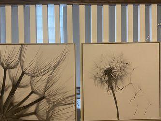 Dandelion Framed Art for Sale in Euless,  TX