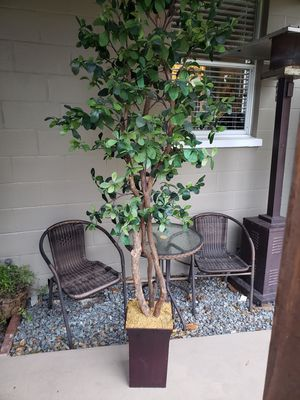 Topiary tree for Sale in Montverde, FL