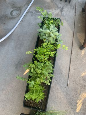 Garden boxes with herbs for Sale in Victoria, TX