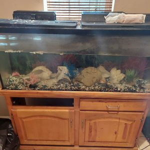 60 Gal Tank for Sale in Dover, FL