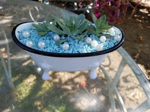 Succulent tub for Sale in City of Industry, CA