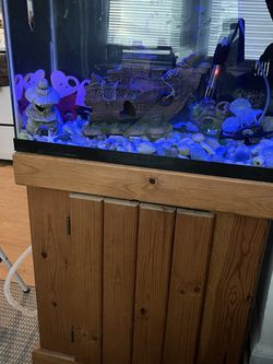 20 Gallon Fish Tank With Everything You Need Plus 3 Fishes for Sale in Stamford,  CT