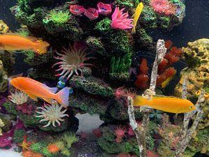 45 gallon aquarium for Sale in Saginaw, TX