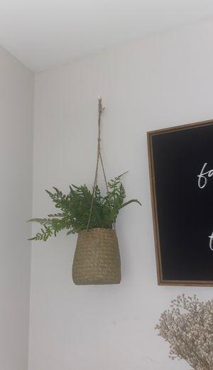 Fake hanging plant decor ( 2 ) for Sale in Philadelphia, PA